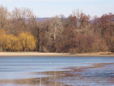 Az tó a Vadlúd Sokadalom óta megtelt vízzel. (Fotó: Balogh Katalin)