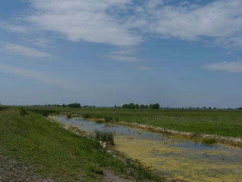 A pusztán meg akadnak vizes élőhelyek.  (Fotó: Balogh Katalin)